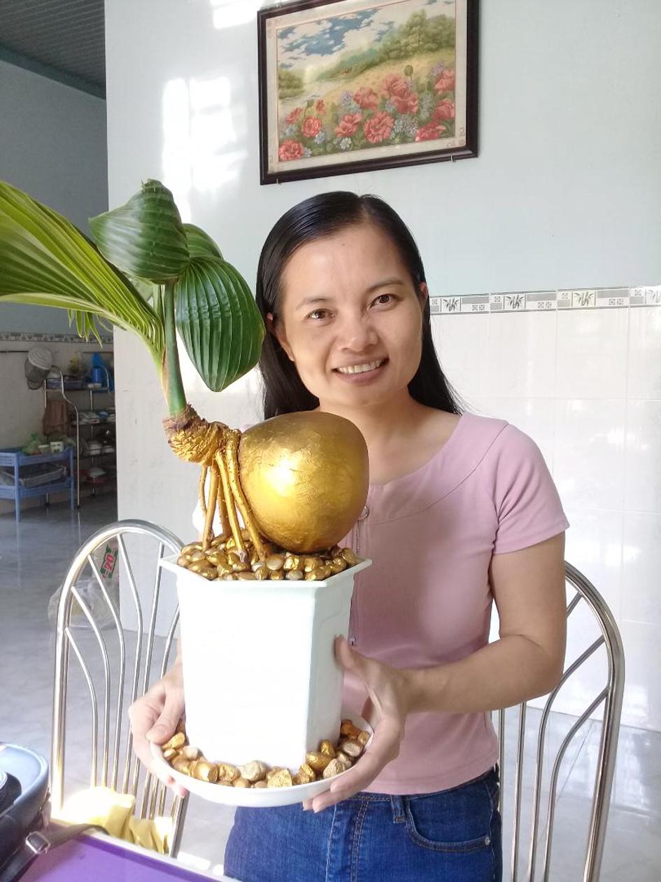 Cô Mỹ Toàn và cây dừa kiểng
