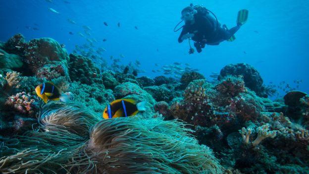 Một thợ lặn theo dõi đàn cá tại Palau.