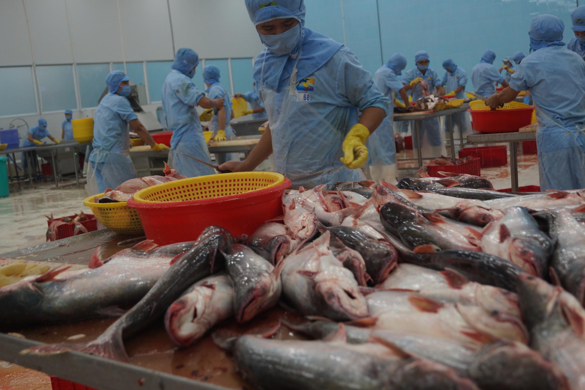 Ngành thuỷ sản Việt Nam một năm nhìn lại, có kỳ vọng nhưng có cả không như mong muốn.