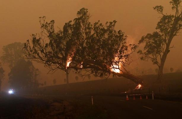 Một gốc cây ngã đổ xuống đường giao thông hôm 5/1 tại bang Victoria - Ảnh: Reuters.