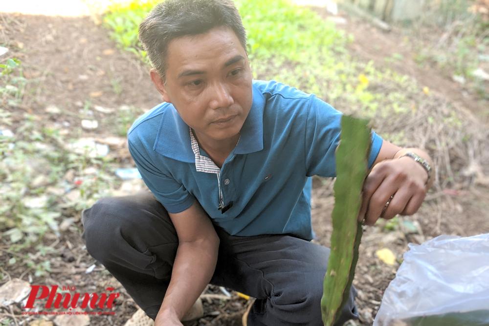 Anh Trần Bá Trình chăm sóc mầm thanh long ruột đỏ trong khu vườn của mình.