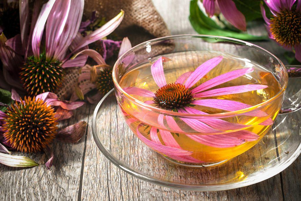 5.Hoa cúc tím Theo truyền thống, hoa cúc tím được sử dụng để tăng tốc độ chữa lành vết thương và ngăn ngừa cảm lạnh và cúm. Nhưng một số nghiên cứu, trong đó có một nghiên cứu được công bố trên Tạp chí Khoa học Da liễu, đã chỉ ra rằng tác dụng kháng khuẩn và chống viêm của nó cũng có thể cải thiện các tình trạng viêm da như bệnh chàm. Và những đặc tính tương tự cũng có thể giúp trị mụn, Tiến sĩ Jacknin nói. Sử dụng trà hoa cúc tím như một loại sữa rửa mặt hàng ngày bằng cách ngâm một miếng vải trong trà chấm lên vết thâm.