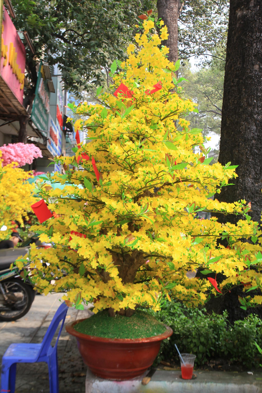 Một hạn chế lớn nhất của các loại hoa, đài vải chơi Tết nếu bảo quản không cẩn thận vào những năm sau hoa sẽ bị tưa, rũ, hoặc dính bụi, đối với những chậu hoa lớn sẽ chiếm dịch tích khá lớn.