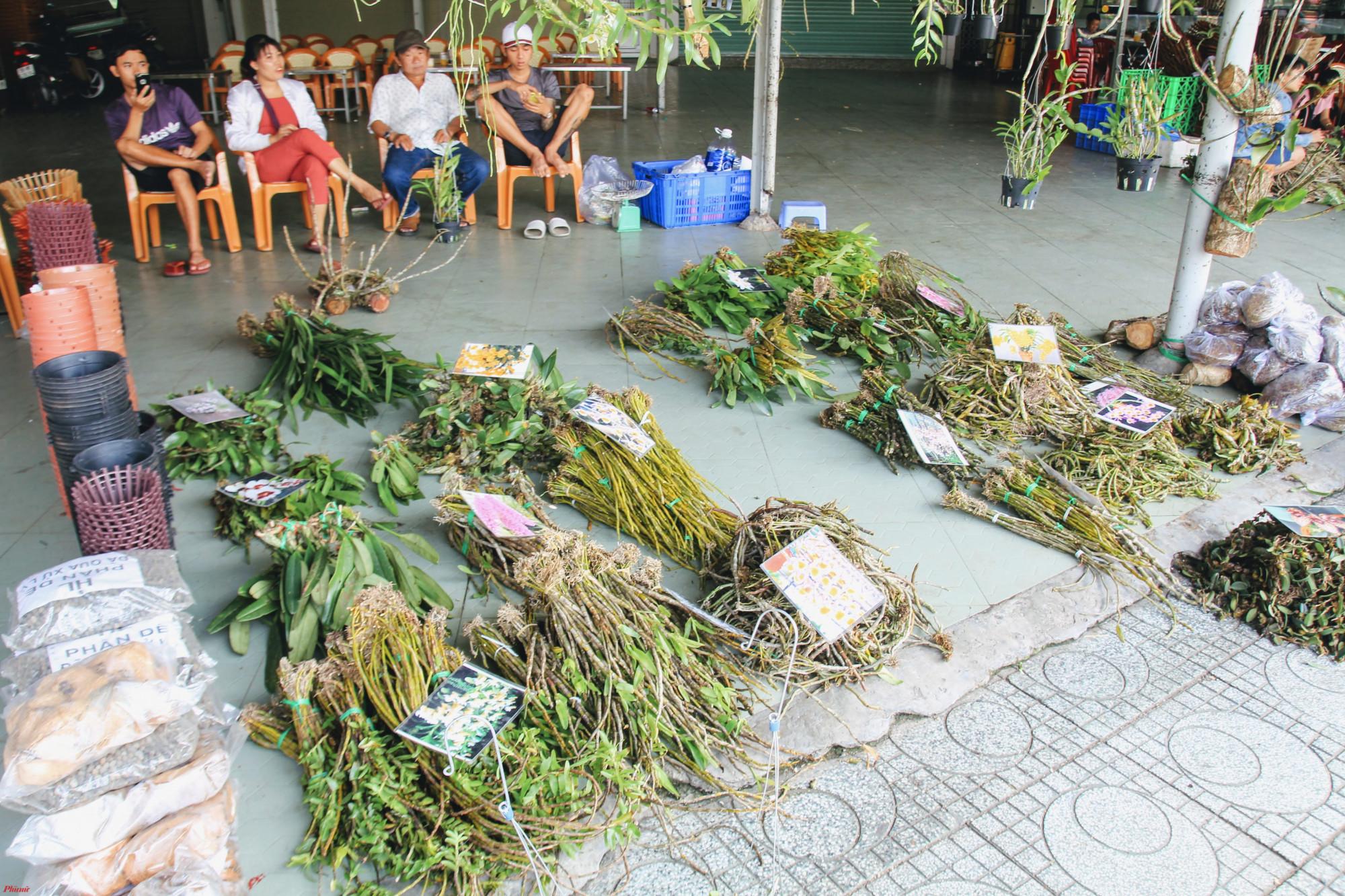 Với giá bán từ 20.000-30.000 đồng/bó lan rừng chưa ra hoa, 200.000-350.000 đồng/chậu lan rừng đã ra hoa nhiều giống lan hiếm với giá mềm cũng hút khách như: giả hạc. long tu Lào, bạch câu, thảo kèn, giả hạc, denro xuân,…