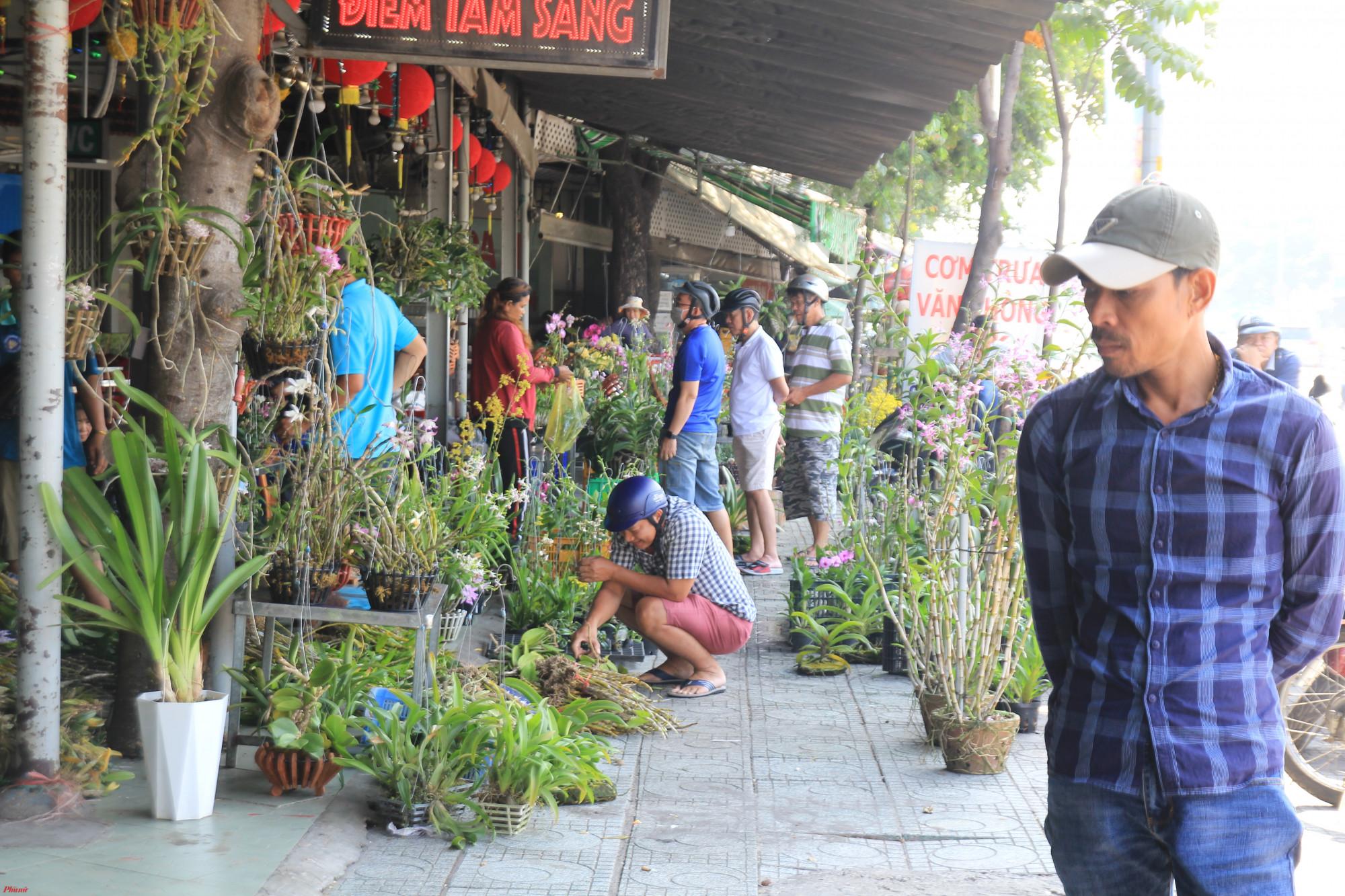 Dọc đường Thành Thái (quận 10, TPHCM) nhiều điểm bán lan rừng Campuchia, Lào, vùng Tây Nguyên đổi về phục vụ khách hàng, các hộ bán chủ yếu trải bạc bày những bó lan sau đó kèm theo một tấm ảnh giống lan ra hoa để cho khách dễ lựa chọn.