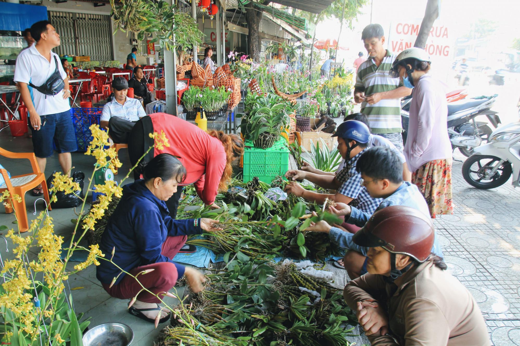 Theo người bán lan rừng là các giống dễ trồng, dễ chăm sóc chủ yếu trồng trên gỗ, trong chậu với than,... hầu hết các giống đều chuẩn bị ra hoa nên chỉ cần vài tuần là có hoa.