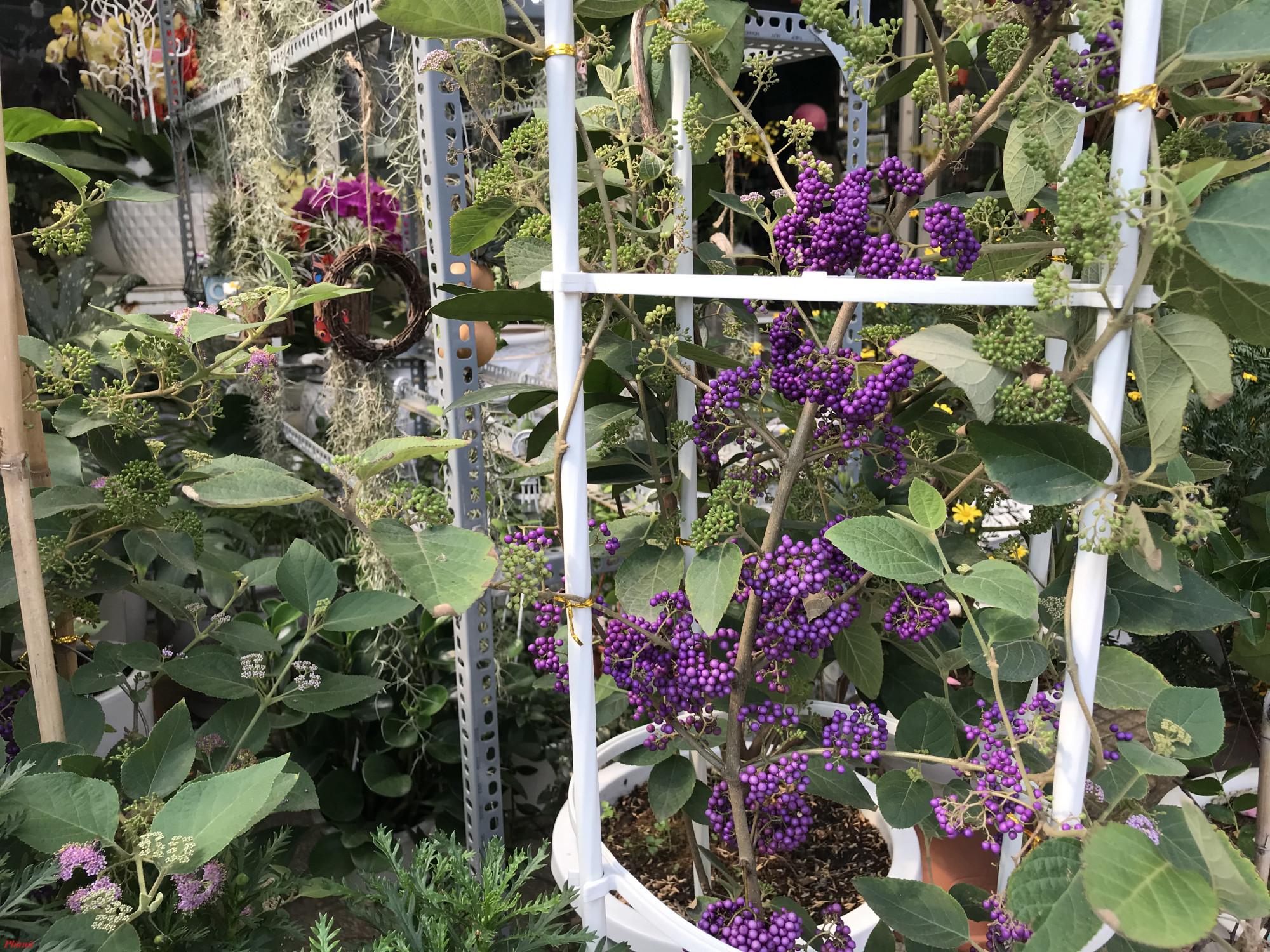 Nhiều loại hoa độc la với giá tiền triệu thu tại điểm bán hoa Thành Thái (quận 10, TPHCM)