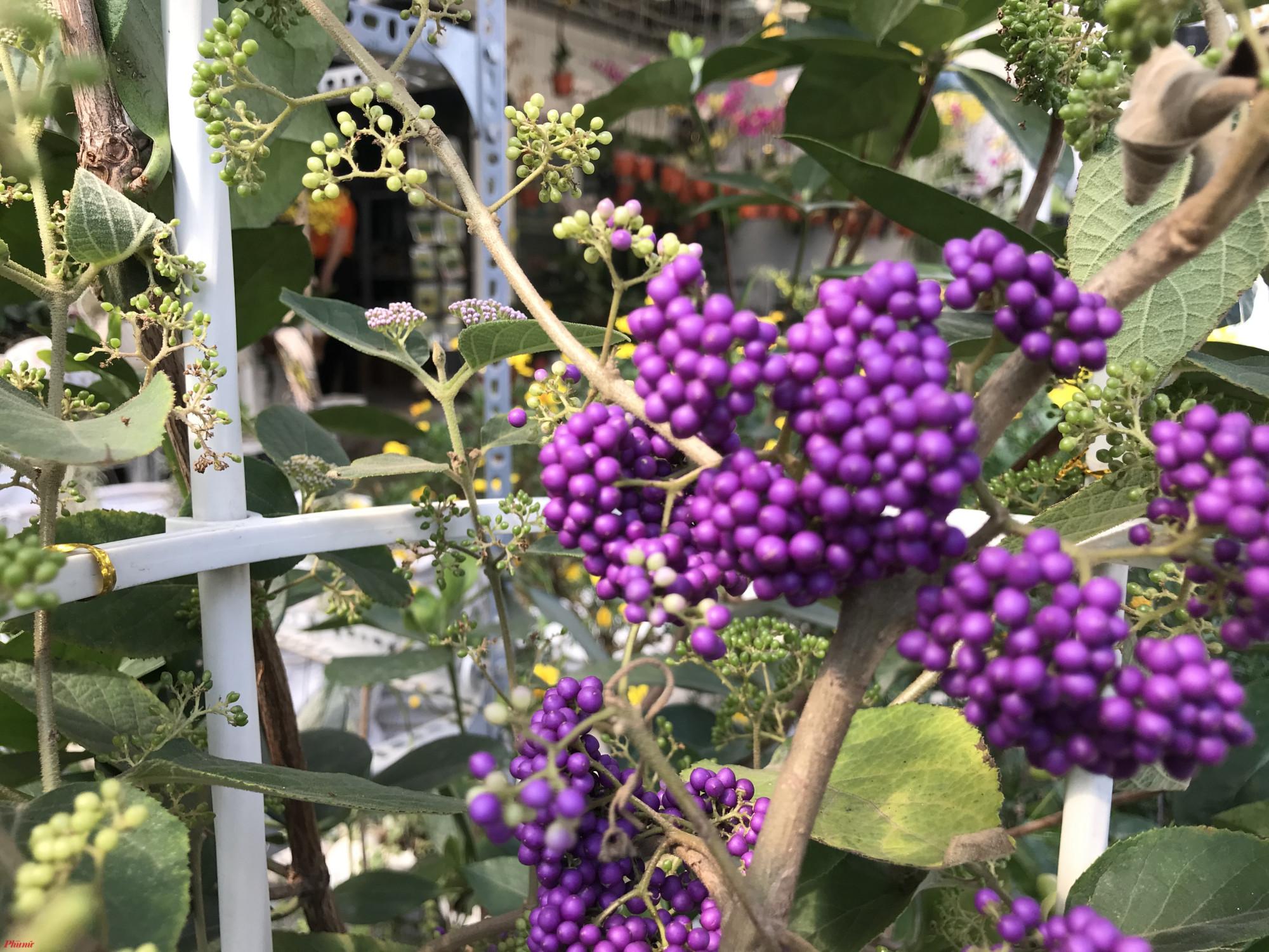 Riêng các loại hoa trong nước, nhiều cửa hàng hoa tại TP.HCM đã tăng cả lượng bán và giá cả từ 30% để đối với một số loại hoa.