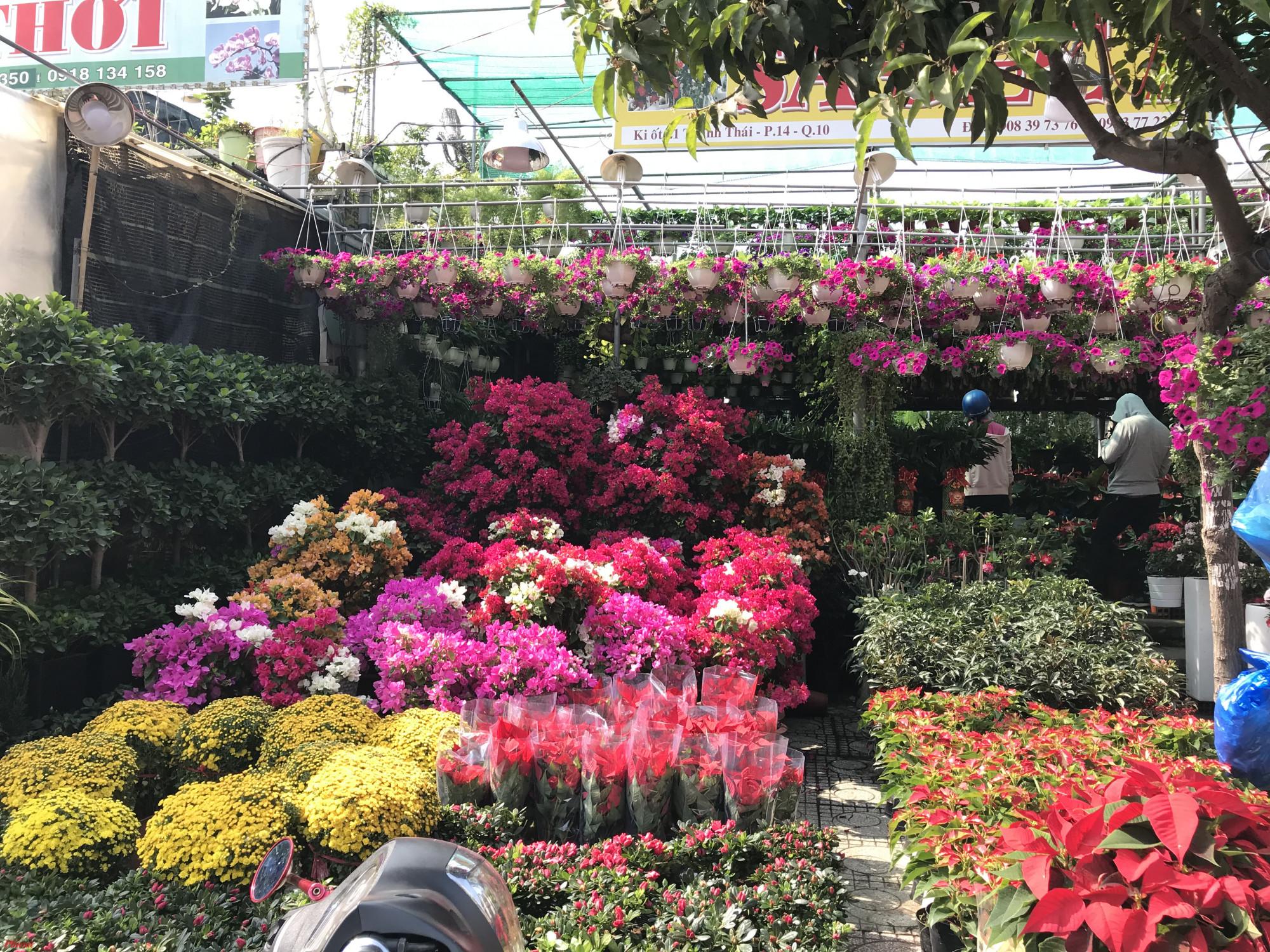 Cùng với các loại hoa truyền thống trong nước phục vụ Tết, các loại hoa ngoại đắt tiền cũng bắt đầu tràn về TPHCM như: đào đông, mai Mỹ, đào Sakura Nhật Bản,…hầu hết đối với các sản phẩm hoa Tết, nhiều cửa hàng hoa ngoại tại TPHCM hay Hà Nội đều chỉ nhận hàng từ 4-6 ngày, riêng một số loại hoa được thông báo sẽ không nhận sau ngày 24/1.