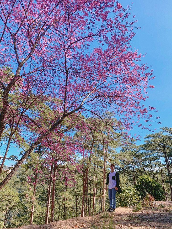 Võ Thịnh chọn ngắm mai anh đào ở một quán cà phê nổi tiếng trên đường Trần Hưng Đạo và khu vực gần đèo Prenn.