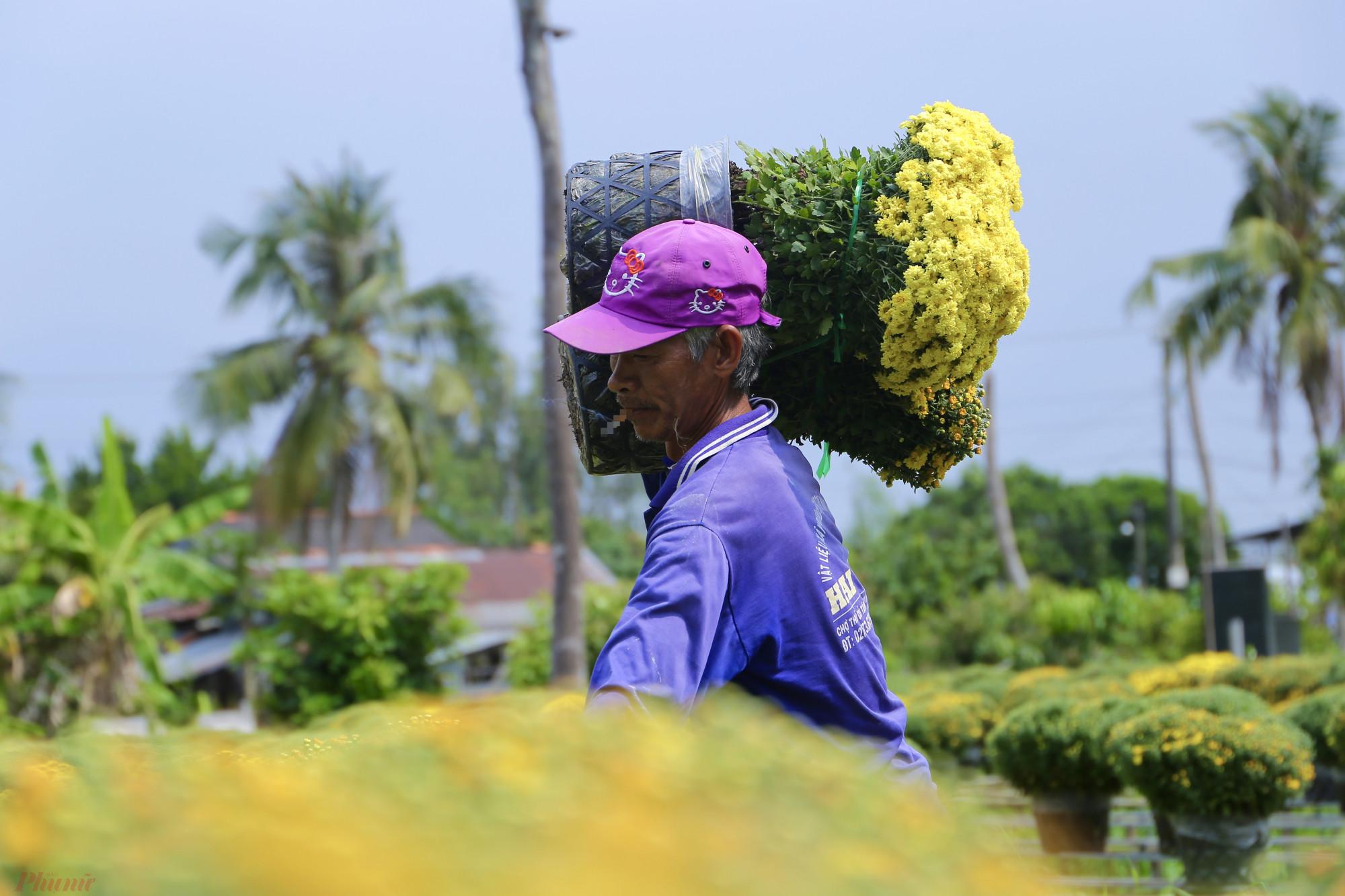 Những người nông dân làm việc không ngơi nghỉ trong những ngày cận Tết để hoa kịp đến các chợ.