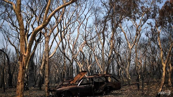 Ước tính hơn 1 tỷ động vật tại Úc đã chết vì cháy rừng trong những tháng qua.