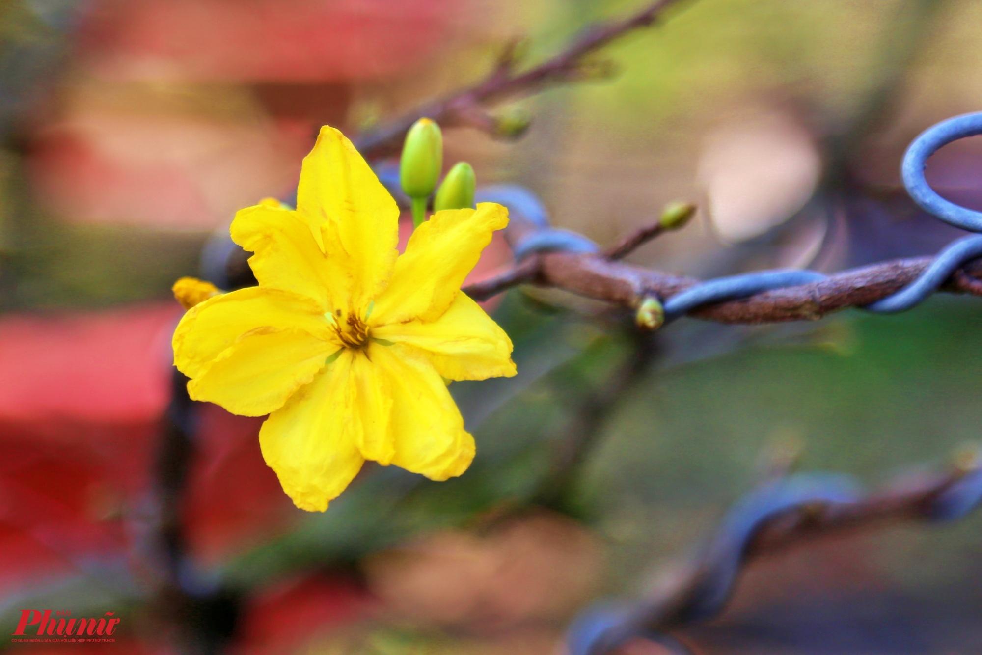 Mức giá thuê mai tuỳ theo cây, dao động từ 3 đến 30 triệu đồng/cây, mai nhà vườn thì giá rẻ hơn mai bán ngoài vì không tốn tiền mặt bằng, và có uy tín hơn. Giá cây tuỳ vào dáng cây, nụ hoa, thế, Nếu cây to thưa nhánh ít nụ thì giá sẽ thấp hơn, anh Việt cho biết thêm.