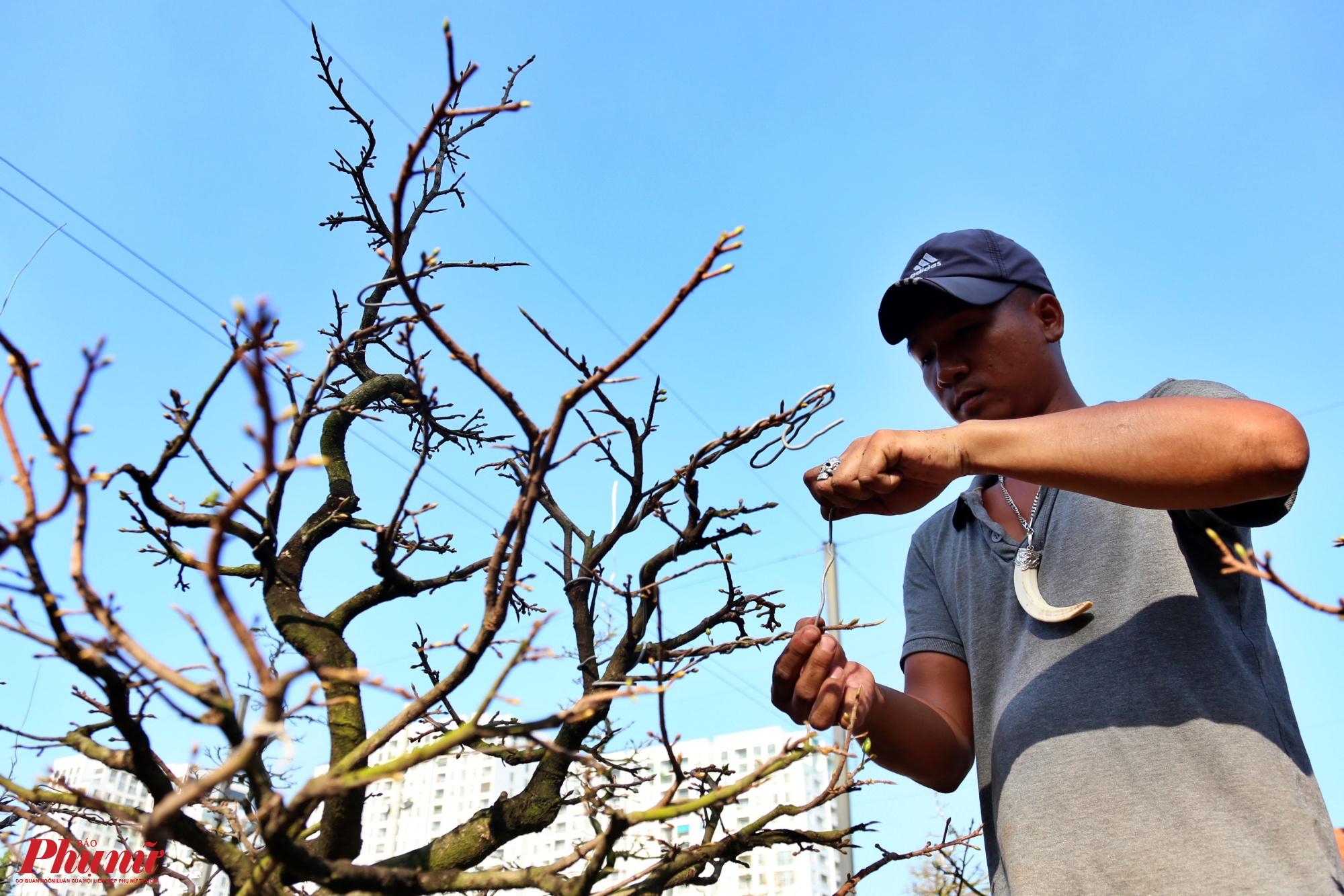 Công nhân Nguyễn Văn Ngọc cho biết: Khi quấn dây kẽm, không nên quấn chặt hay lỏng quá và đường quấn chéo phải hình thành những góc 45 độ với trục thẳng đứng của thân cây bonsai. Sau khi quấn xong ta uốn cành bằng cách xoắn thật nhẹ nhàng theo hướng dây kẽm để dây kẽm luôn được giữ chặt vào vỏ cây.