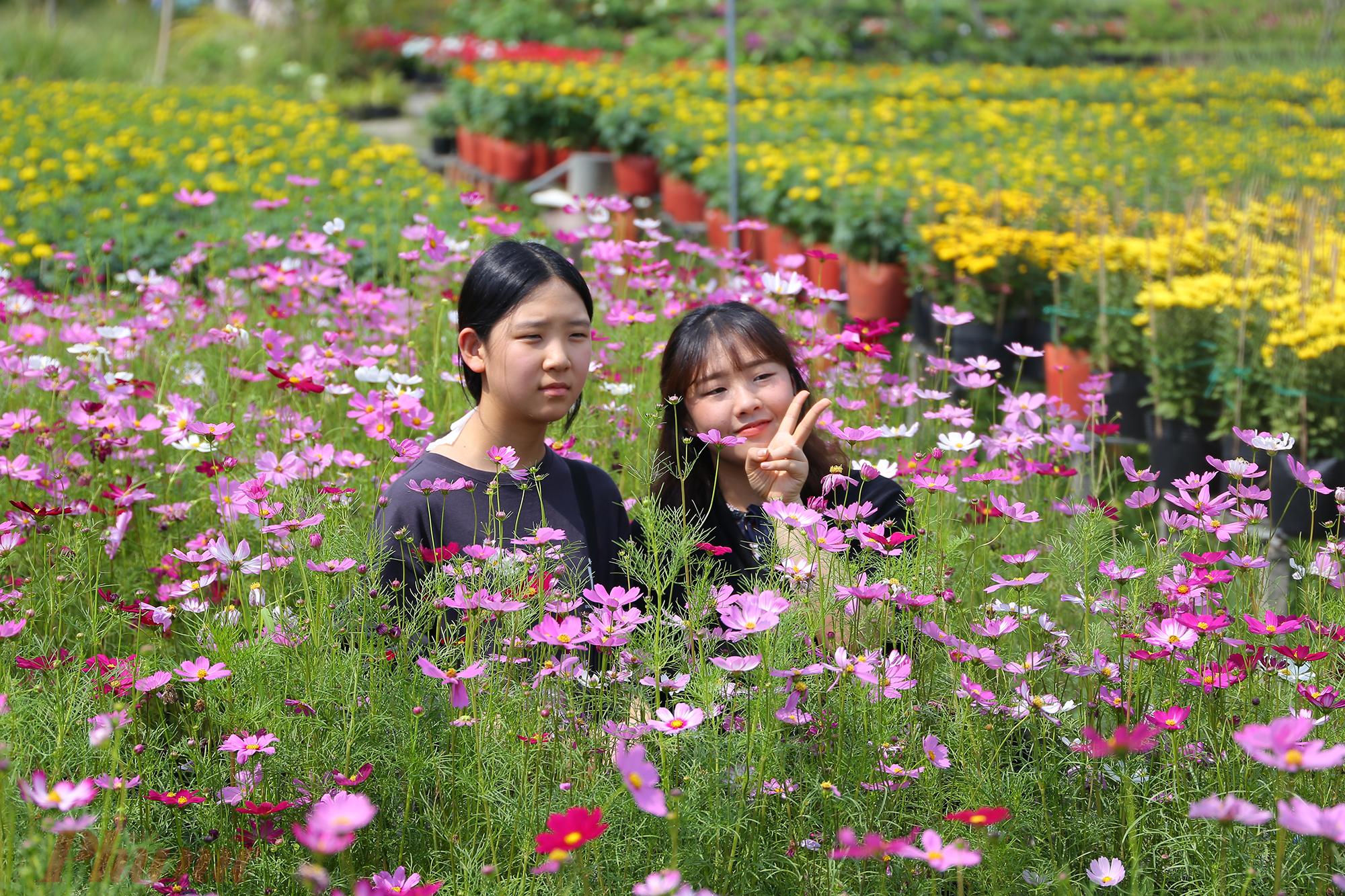 Hai du khách Hàn Quốc thích mê với cánh đồng hoa sao nhái màu hồng ngọt ngào.