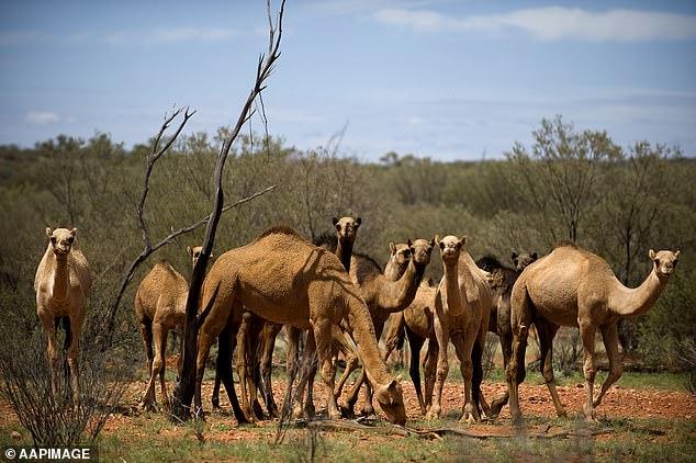 Hơn 5.000 con lạc hoang dã đã đã bị tiêu diệt trong chiến dịch 5 ngày, kết thúc hôm 12/1.