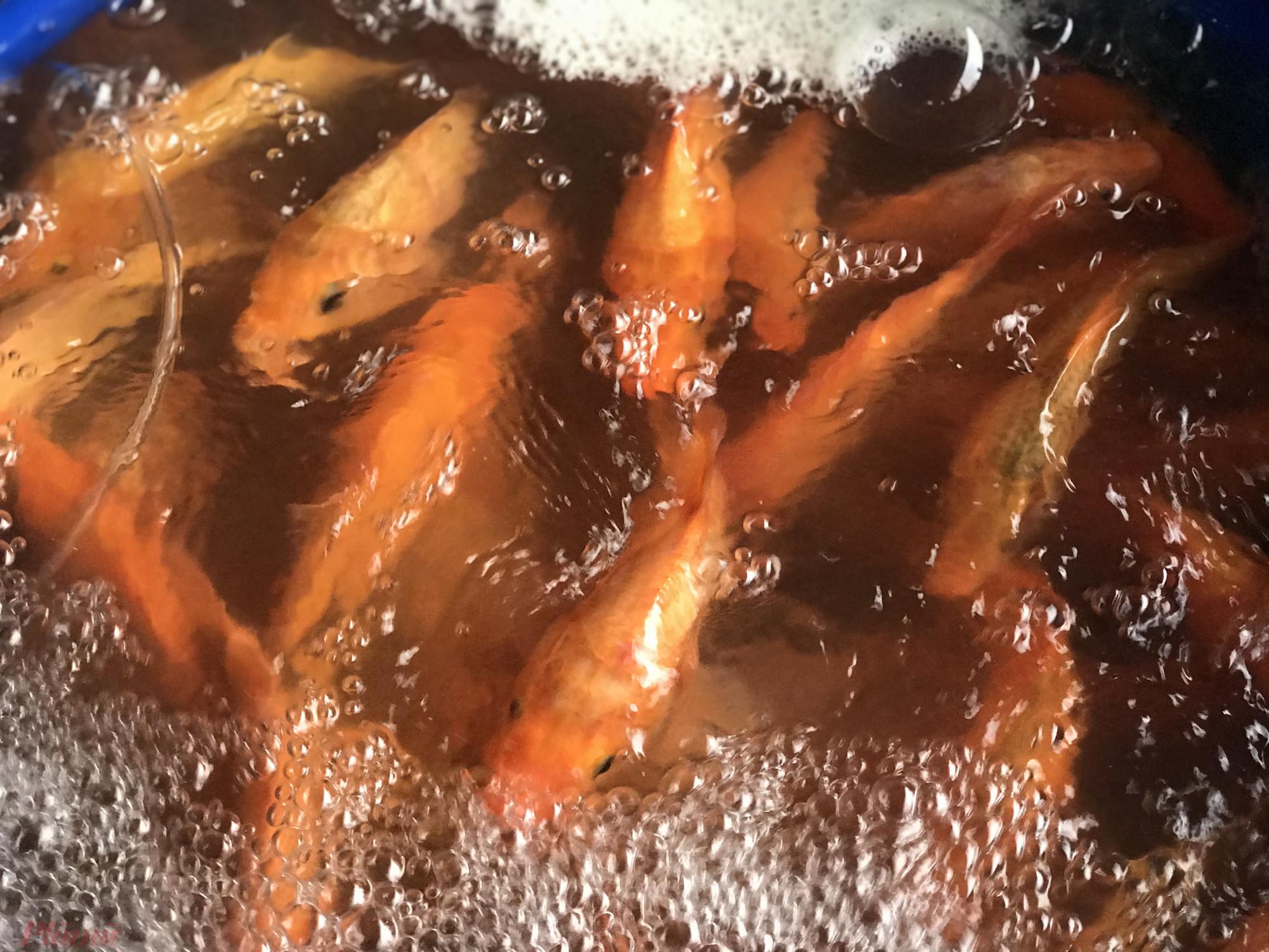 Giá cá chép năm nay có khá nhiều loại, loại nhỏ nhất bằng ngón tay cái người lớn mỗi con 10.000 đồng, lớn hơn 20.000-30.000 đồng/con, đặc biệt cá lớn người bán sẽ cân ký với mỗi ký là 100.000 đồng.