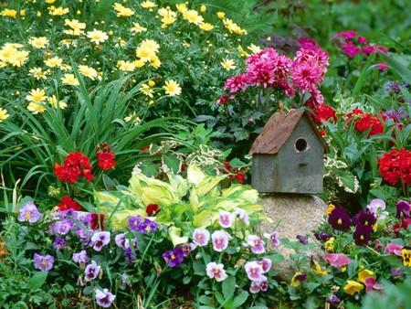 Bạn có thể thu hút chim theo màu sắc của hoa