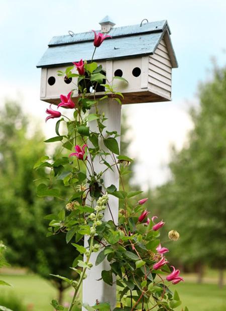 Đất lành chim đậu - khi chim đã đến bạn có thể tạo môi trường sống thân thiện cho chúng