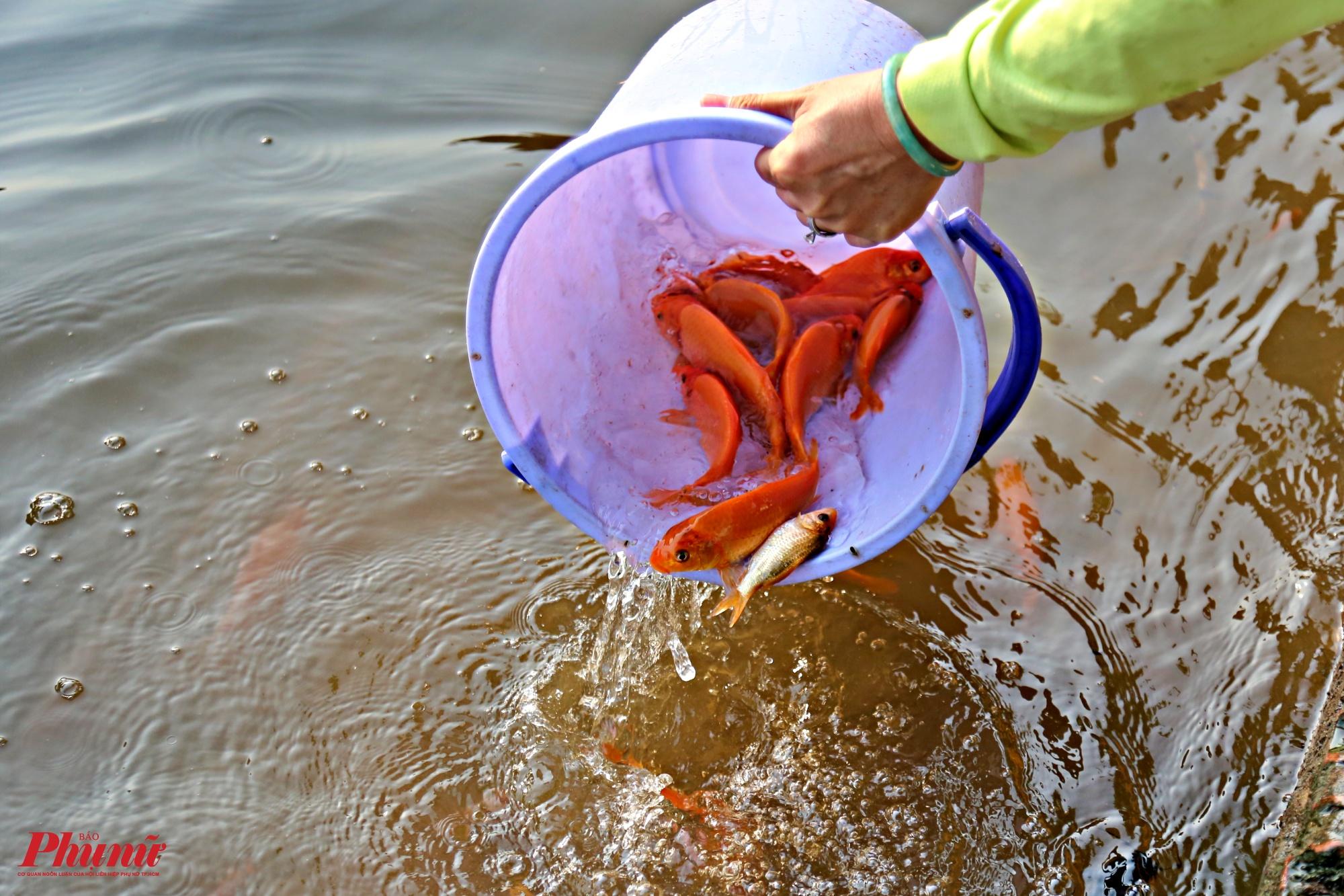 Nhiều người sau khi phóng sinh phải tìm cách đẩy cá bơi để tránh bị bắt