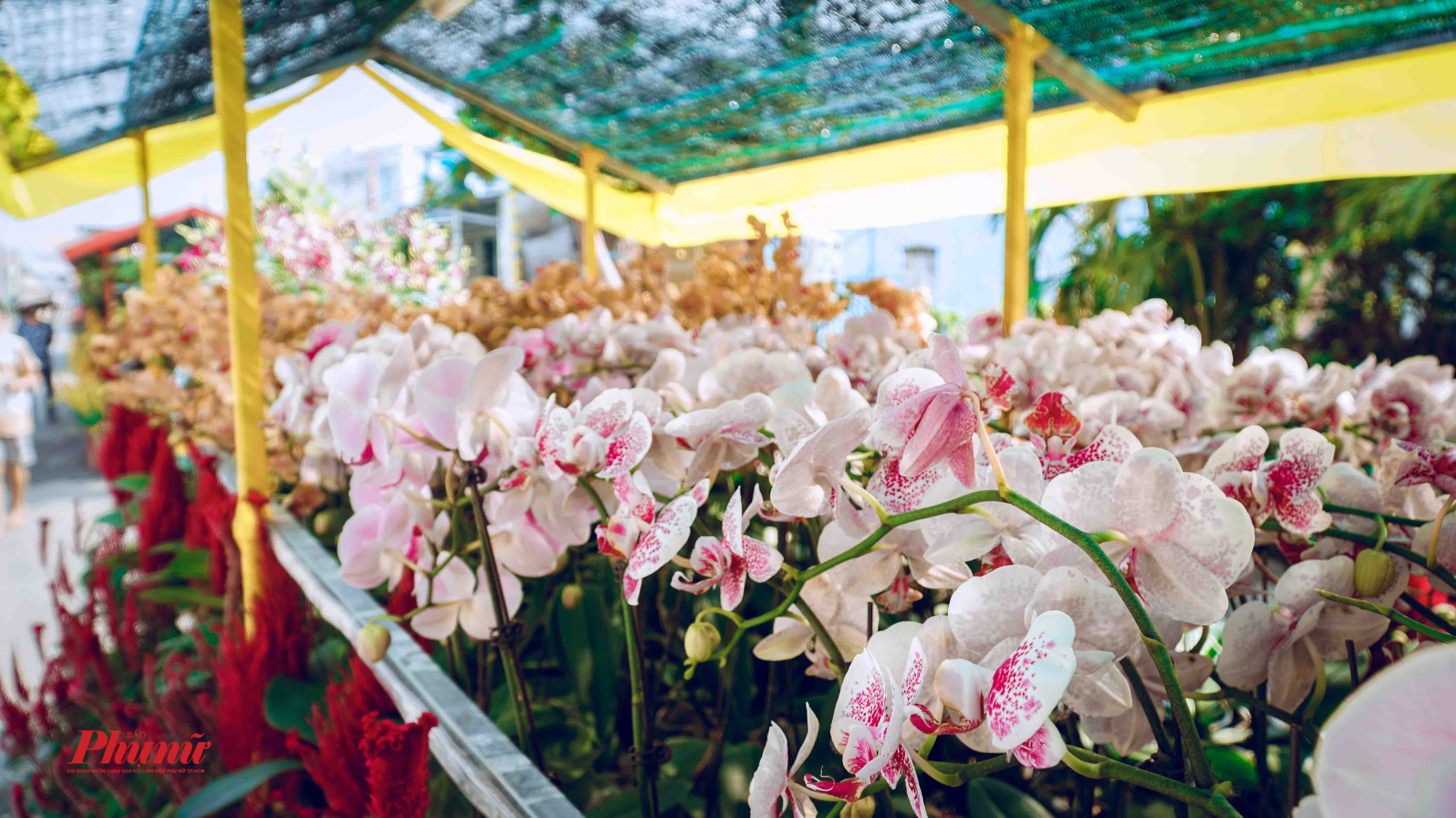 Đa dạng giống lan là điểm mạnh của kinh tế xã Phước Lại trong những năm gần đây