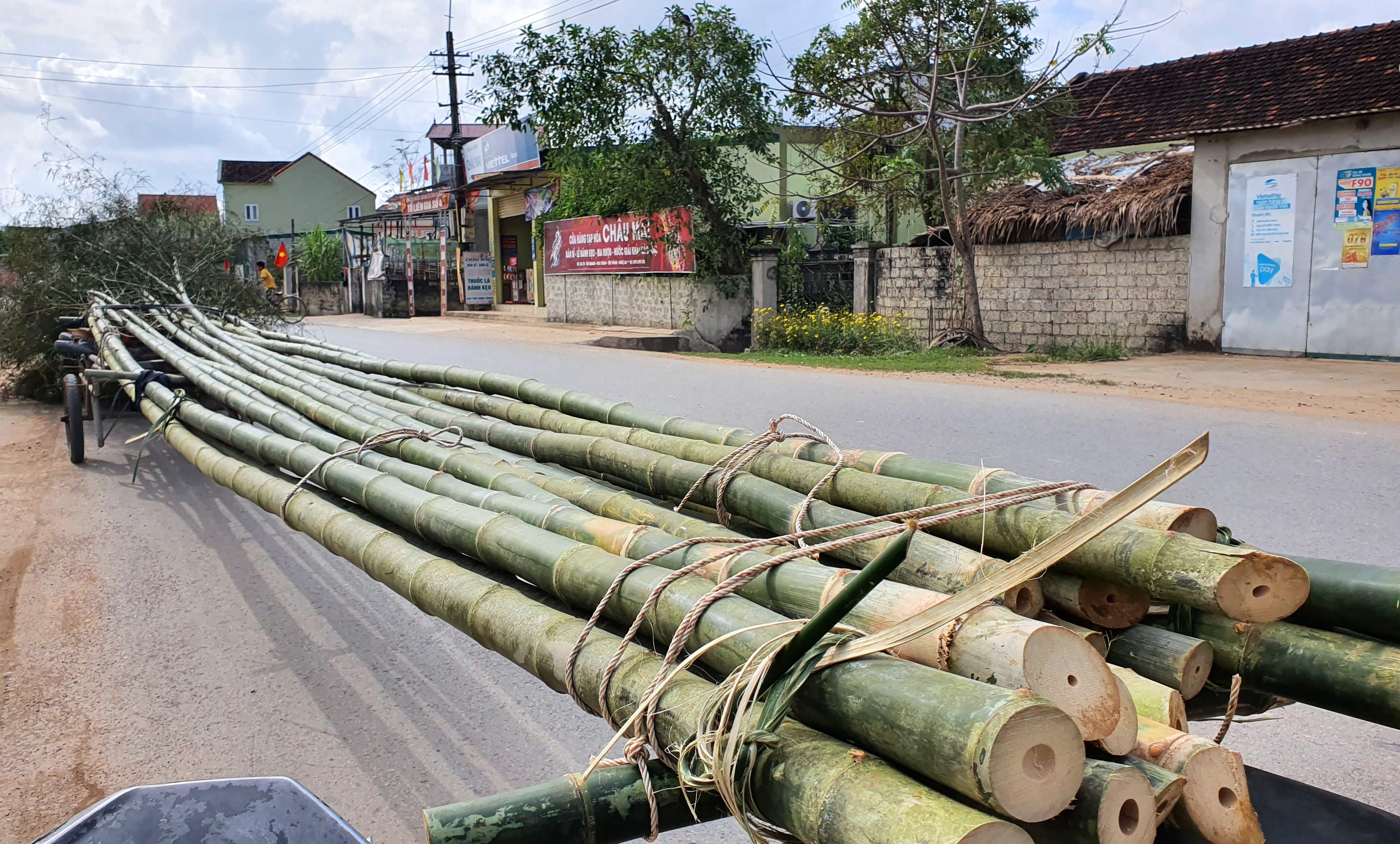 Những cây tre già, thẳng và cao từ 10-15m được chọn lựa làm cây nêu