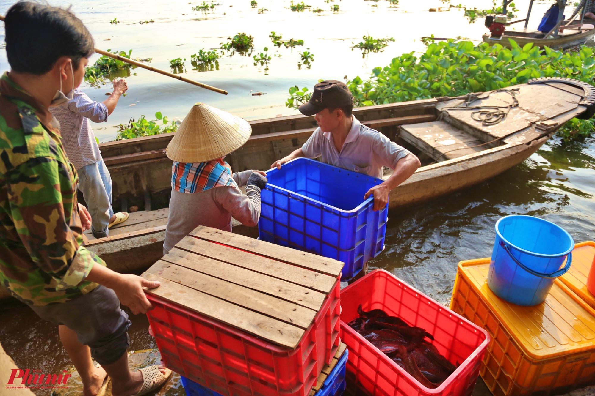 Chuyển cá thùng cá ra giữa sông thả để tránh bị chích điện