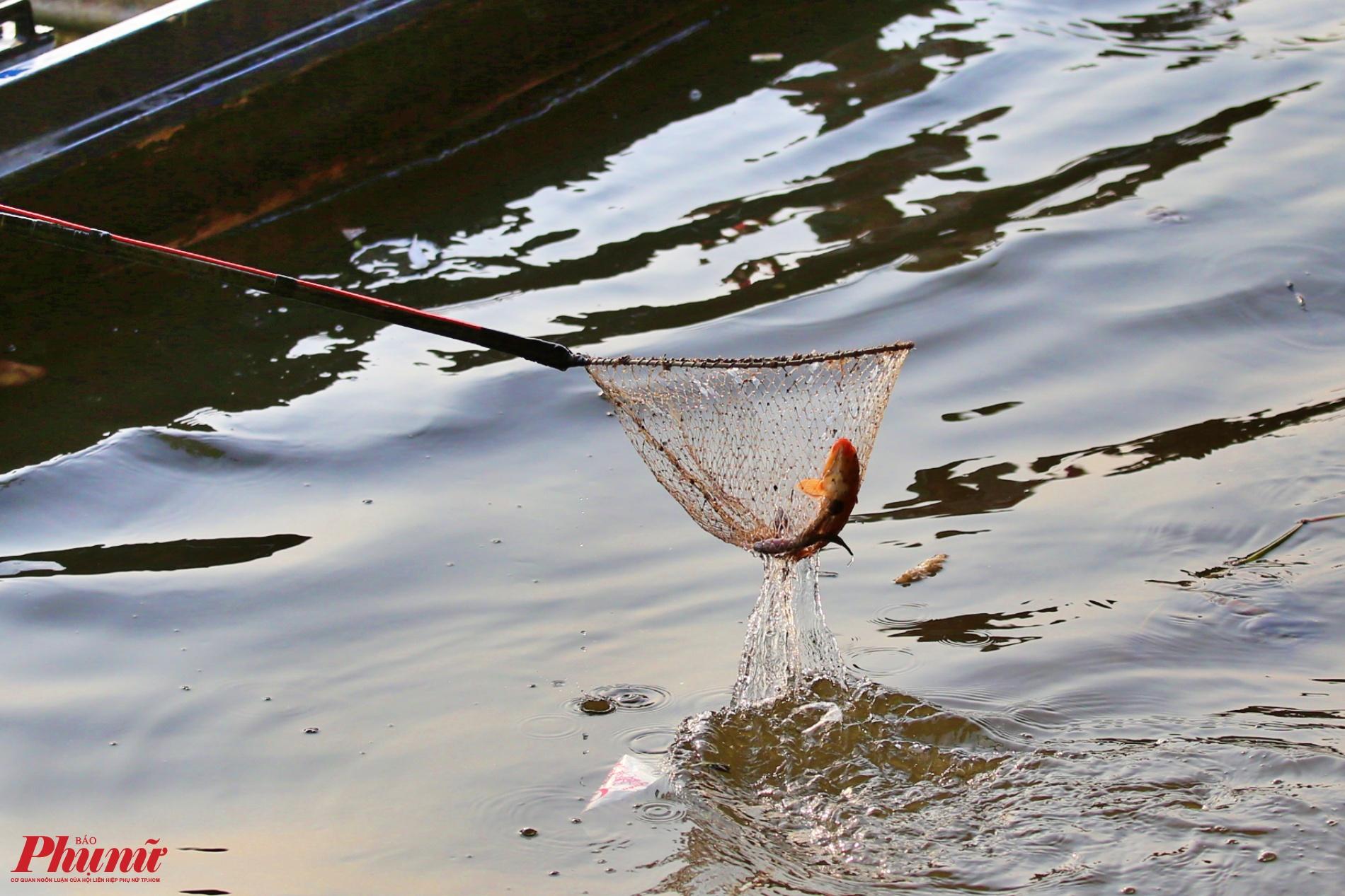 Một con cá chép vừa thả xuống sông đã rơi vào lưới của đội quân chích điện.