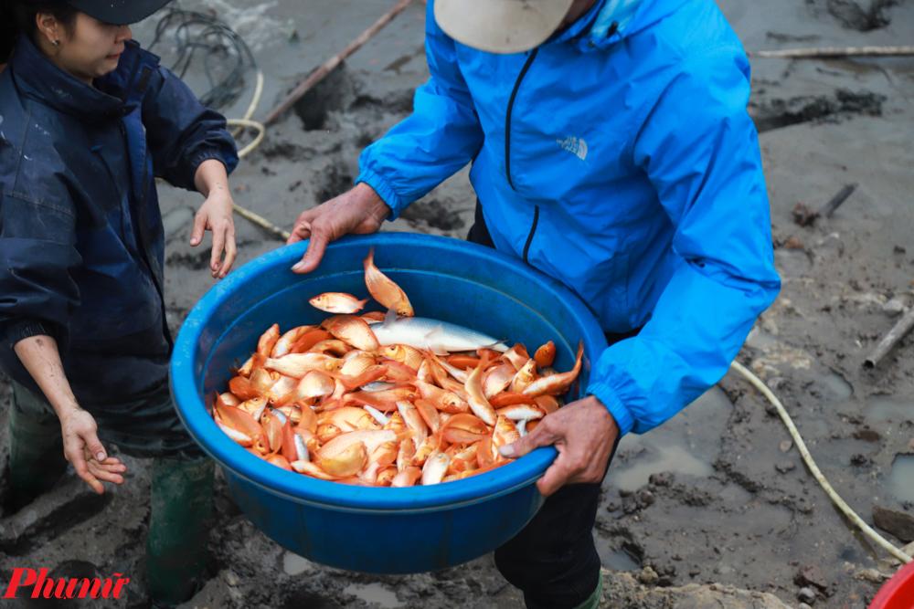 Người dân sẽ chọn lọc những con cá tốt nhất đem đi tiêu thụ. Cá được phân ra thành các loại khác nhau, tùy thuộc vào chất lượng để quy định giá thành cho phù hợp. Chất lượng cá đi đôi với giá thành, loại nào càng đẹp giá càng cao hơn.