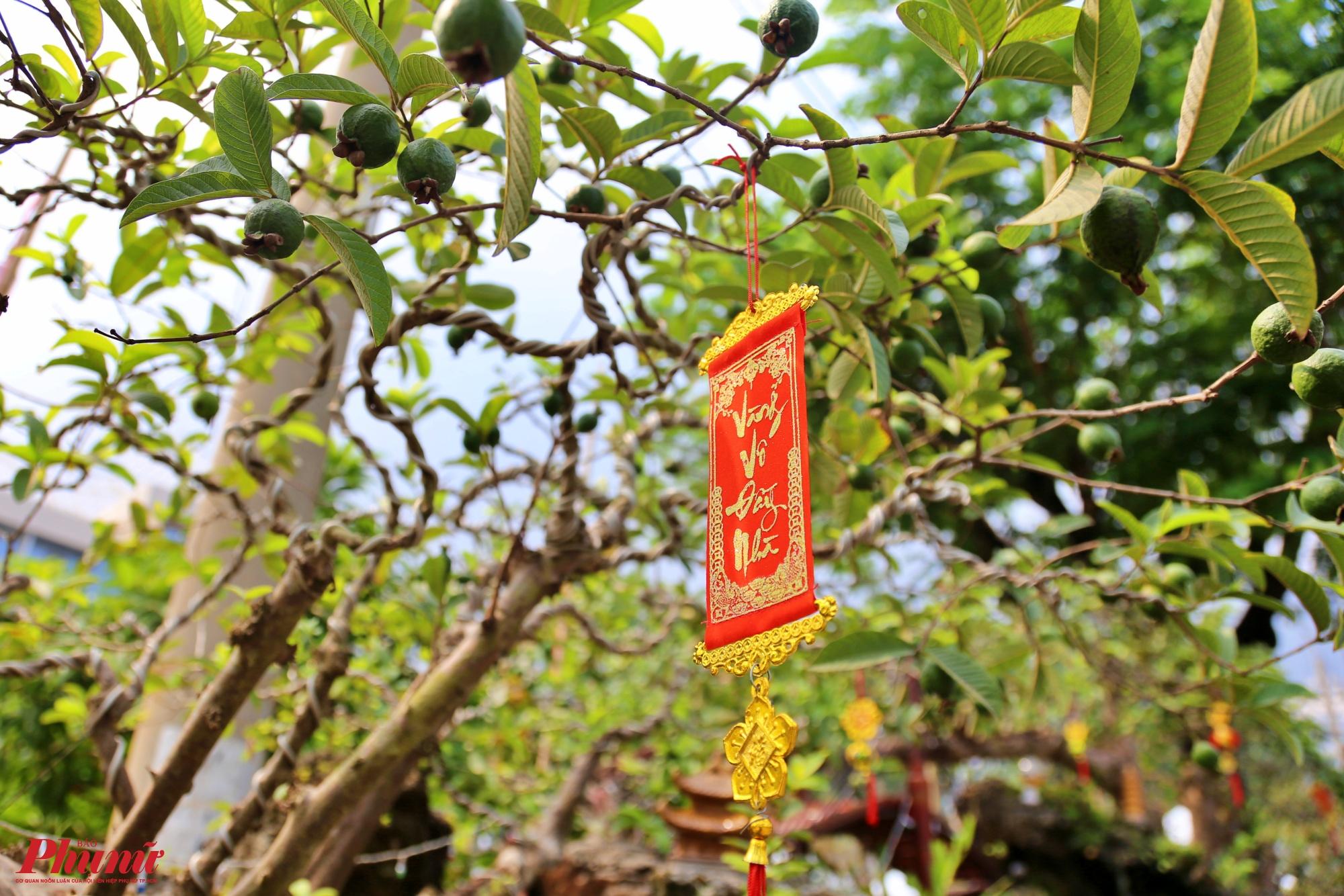 Thân cây được gắn thêm chữ thư pháp vàng vô đầy nhà với mong muốn chủ nhân sở hữu sẽ gặp nhiều may mắn và phát tài trong năm mới