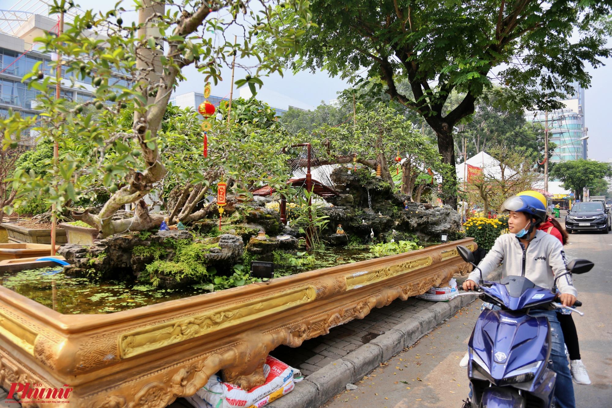 Nhiều du khách đi đường choáng ngợp trước vẻ đẹp của gốc ổi có thế độc nhất vô nhị