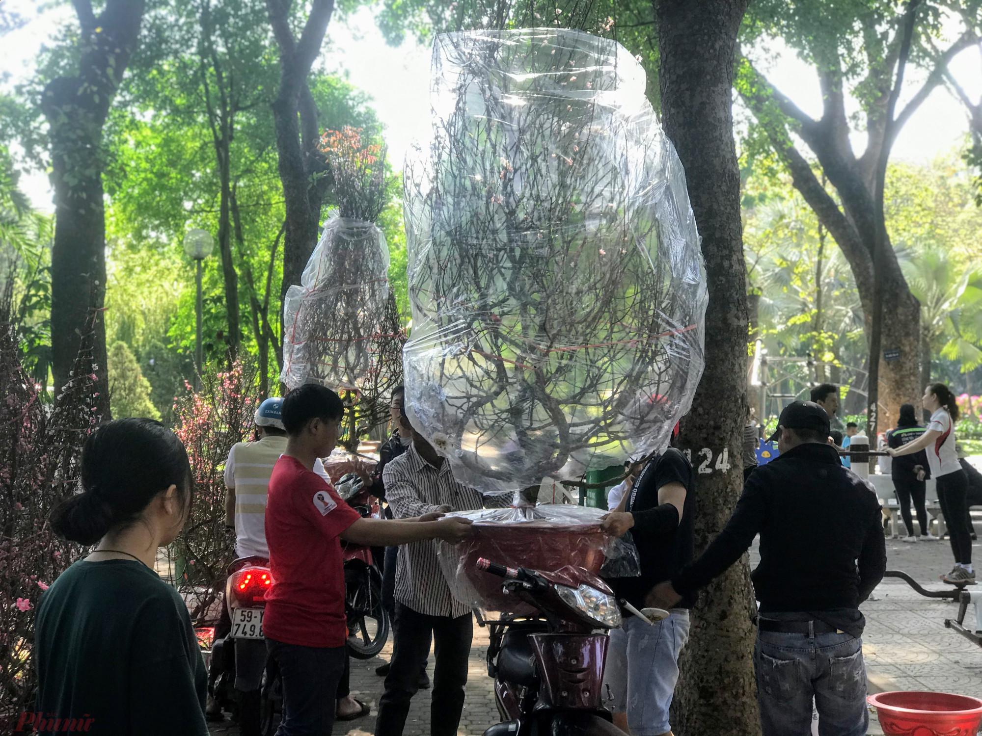 Những năm trước, khu vực bán hoa kiểng tết tại các công viên như: 23/9, Lê Văn Tám (quận 1), Hoàng Văn Thụ (Tân Bình), Phú Lâm (quận 6)... nhưng năm nay số lượng điểm bán đã giảm đi rất nhiều