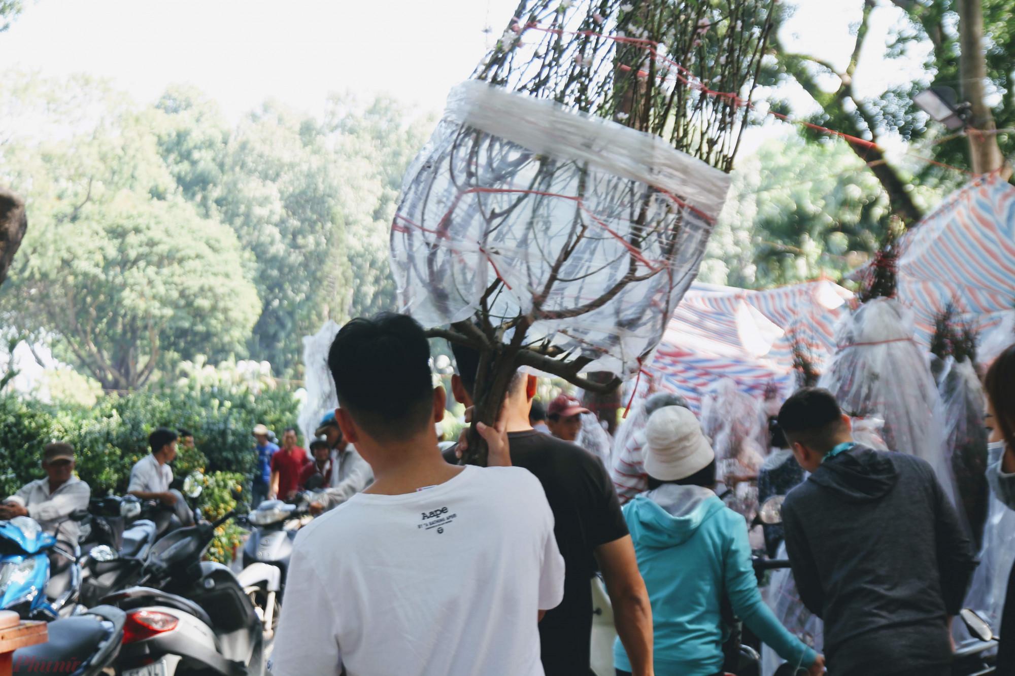 Đào được bán dưới dạng cành hoặc cây, tùy theo chọn lựa của khách