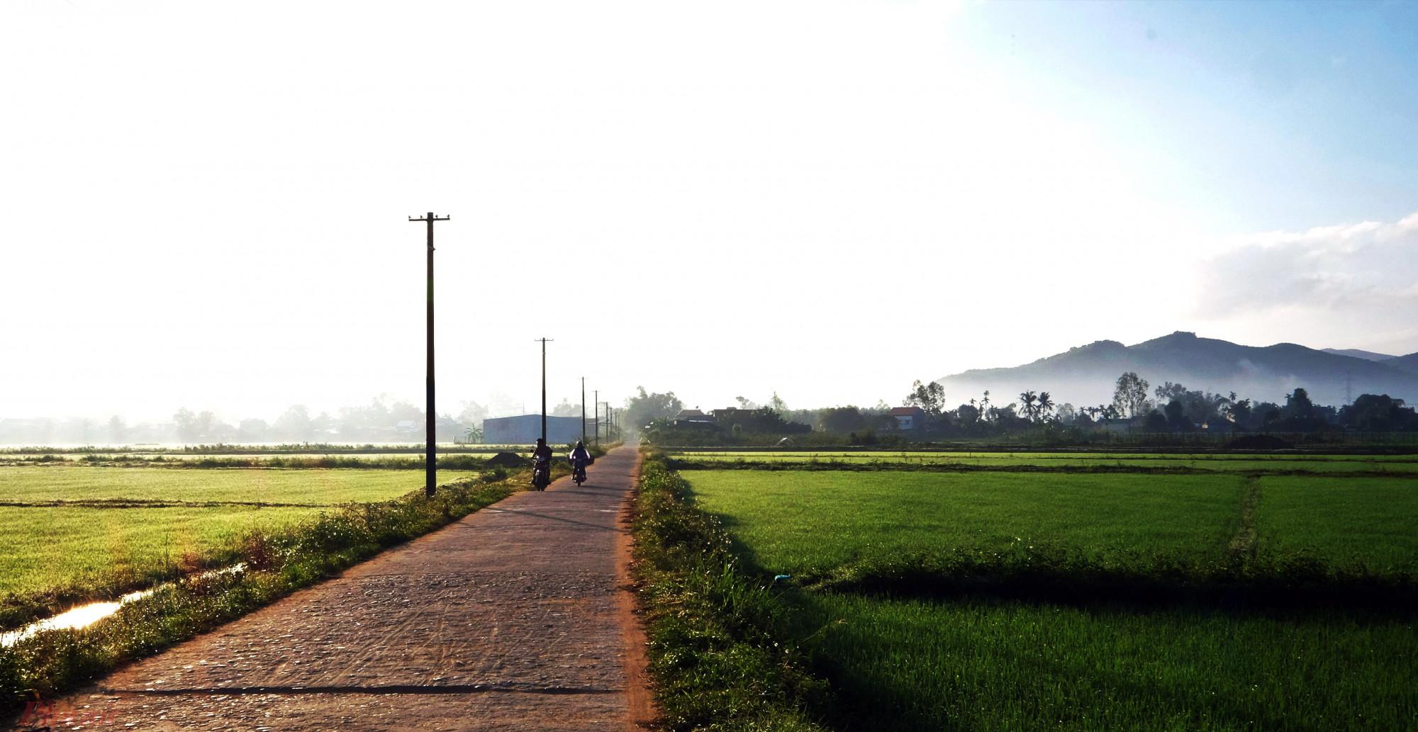 Cảnh nắng sớm xuyên qua một một cánh đồng ở huyện Mộ Đức, Quảng Ngãi trong ngày mùng một tết.