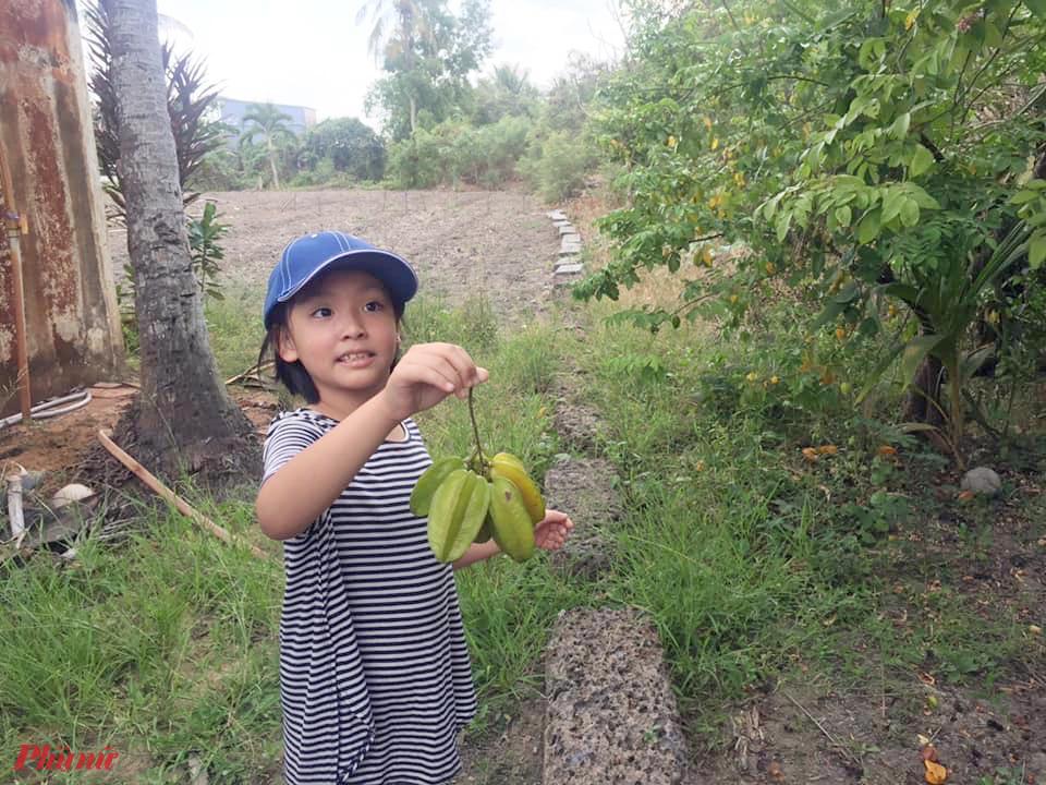 Được trèo cây hái quả cũng là trải nghiệm làm những đứa trẻ ở phố thích thú khi về quê