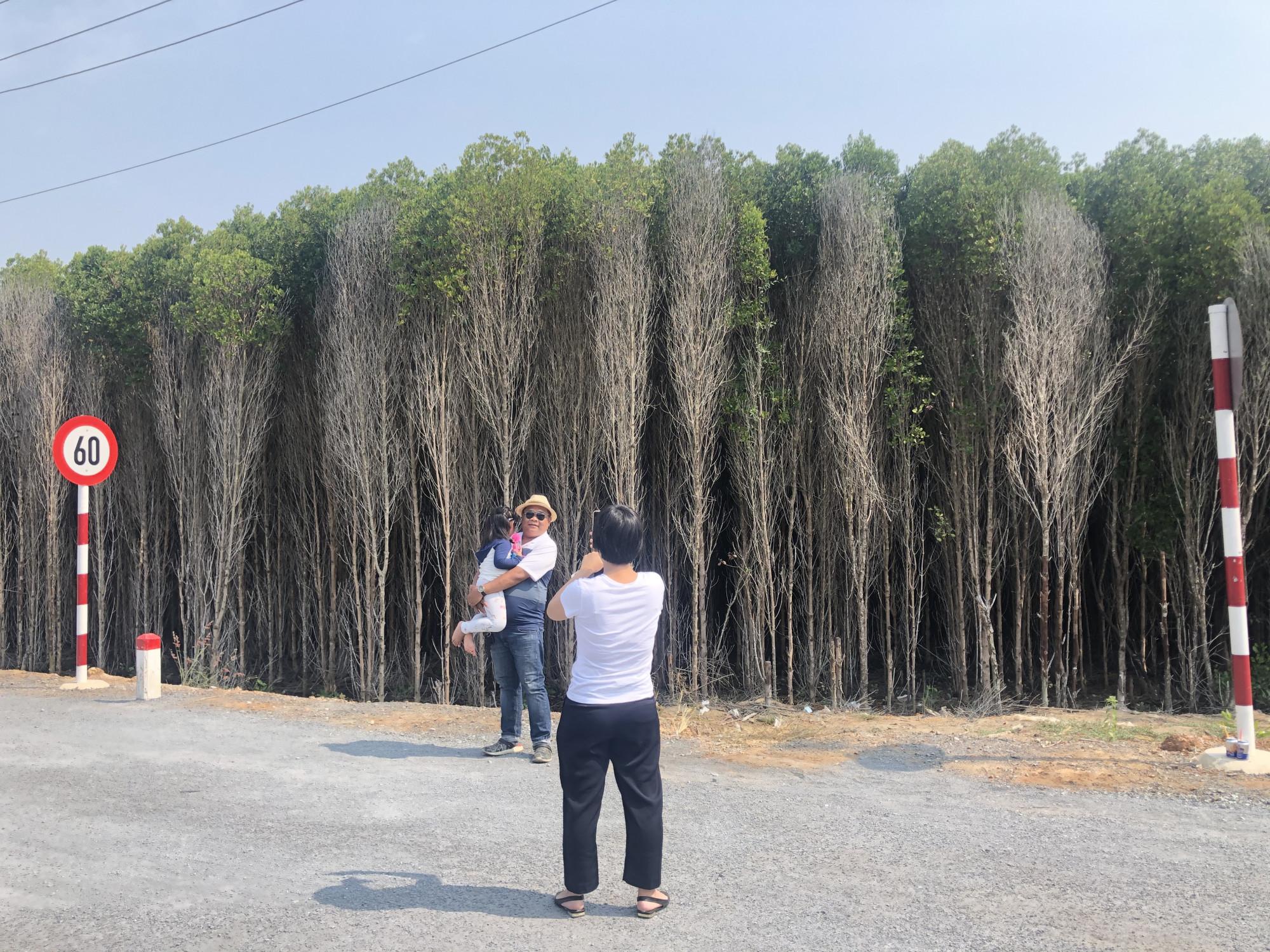 Những cánh rừng ngập mặn đẹp như tranh được người dân từ trung tâm TPHCM trầm trồ