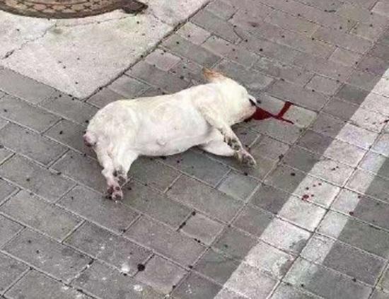 Người dân tìm thấy chú chó nằm chết trên mặt đất sau khi bị ném từ lầu cao.