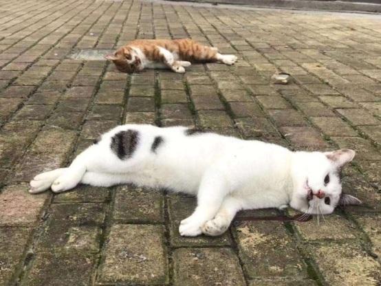 Những con mèo xấu số ở Thượng Hải cũng được cho là thú cưng bị ném đi vì chúng có bộ lông mượt và sạch sẽ, không giống mèo hoang.