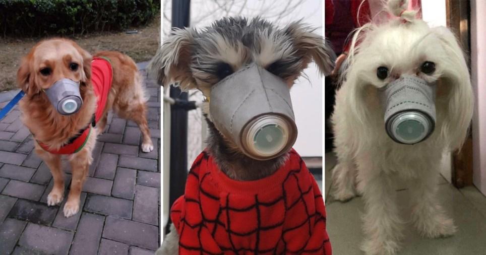 Khẩu trang, mặt nạ cho chó trở nên hút hàng khi có tin đồn thú cưng cũng bị nhiễm coronavirus.