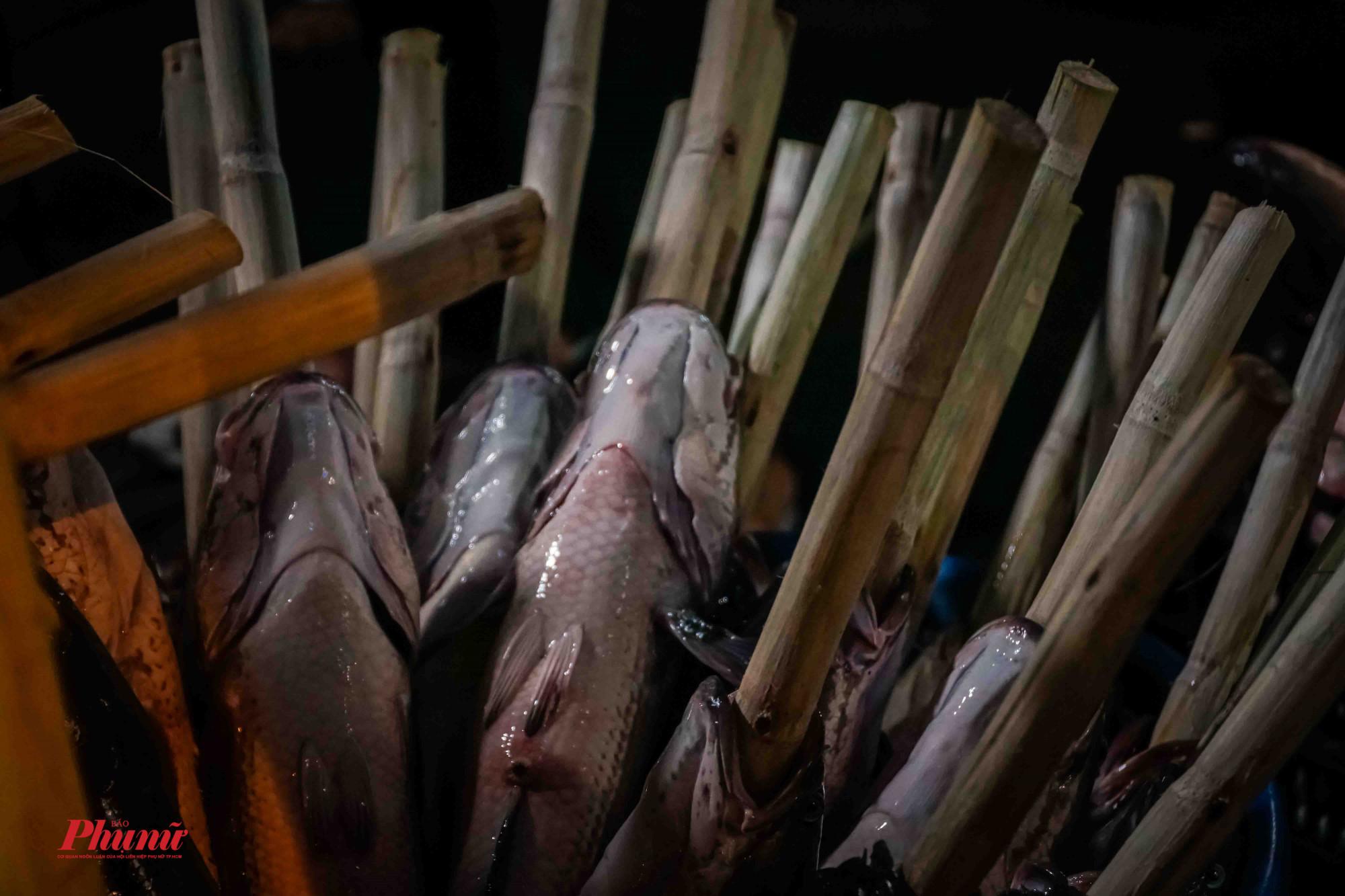 Nướng cá bằng mía (loại mía xay nước uống hằng ngày)