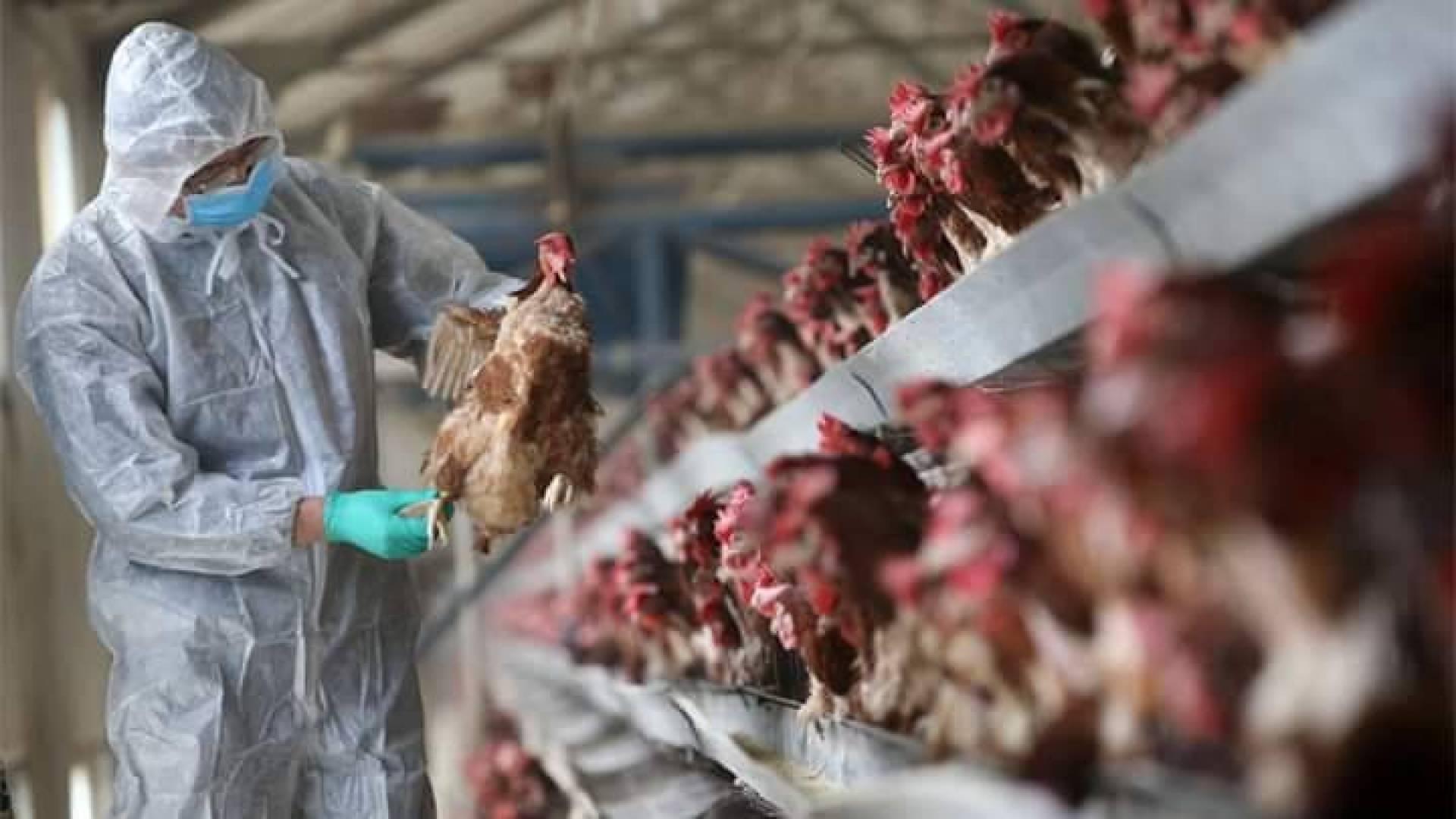 Trung Quốc phát hiện ổ dịch cúm A (H5N1) mới tại tỉnh Hồ Nam.