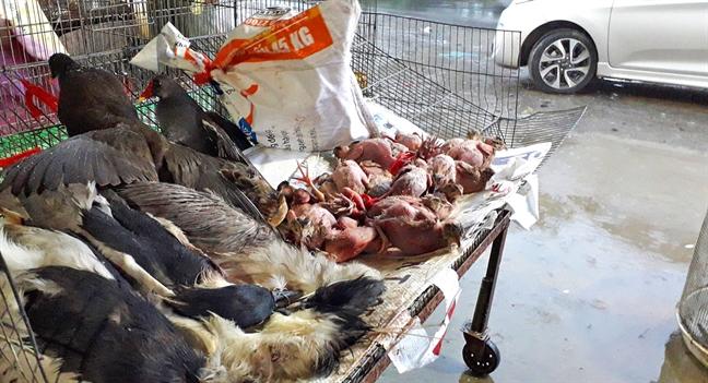 Chim chết bày bán ở chợ Thạnh Hóa, tiềm ẩn nguy cơ lây truyền dịch bệnh - Ảnh tư liệu: Trung Thanh