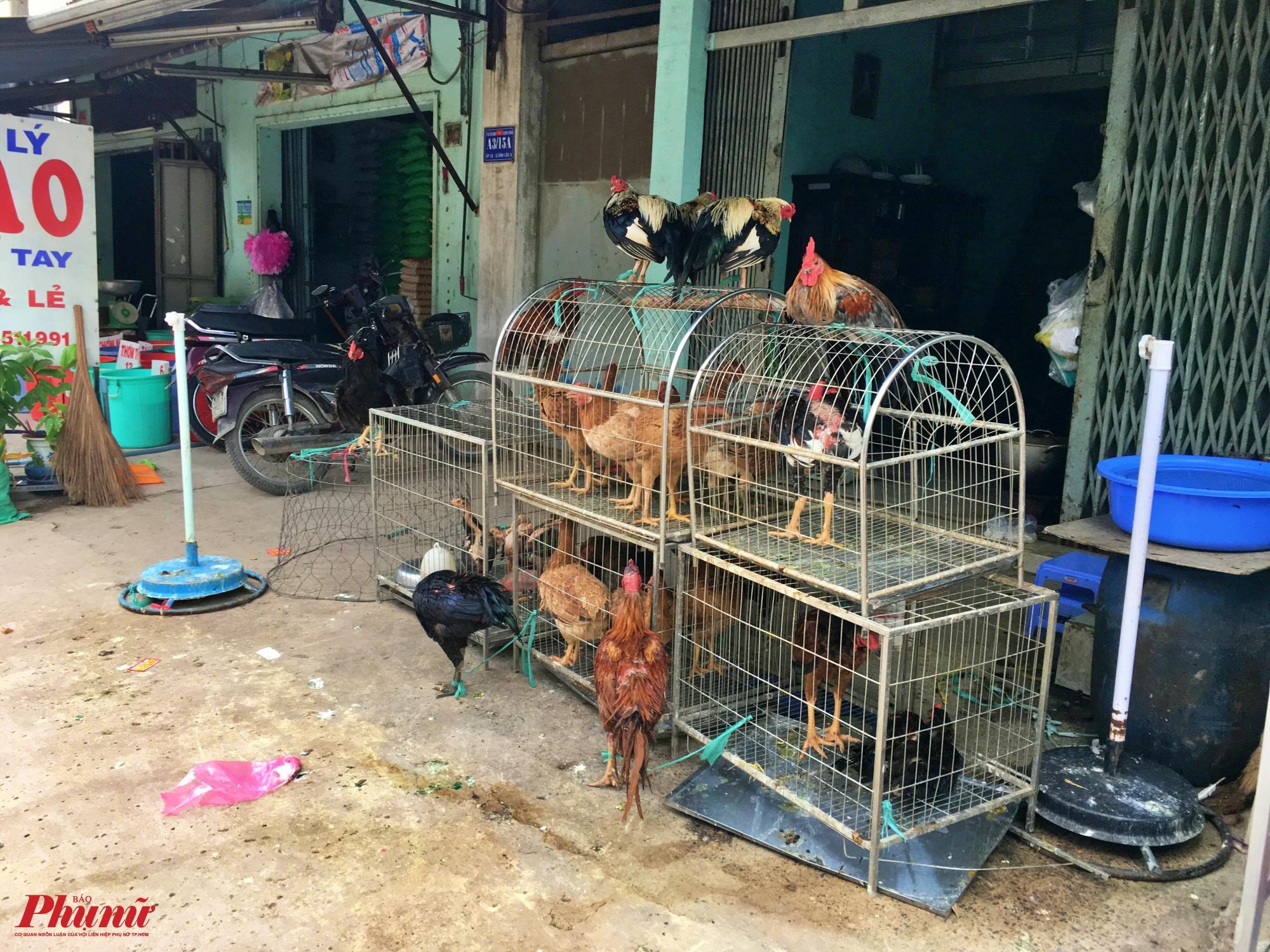 Một điểm gia cầm bày bán công khai trên đường Vĩnh Lộc, huyện Bình Chánh, TP.HCM
