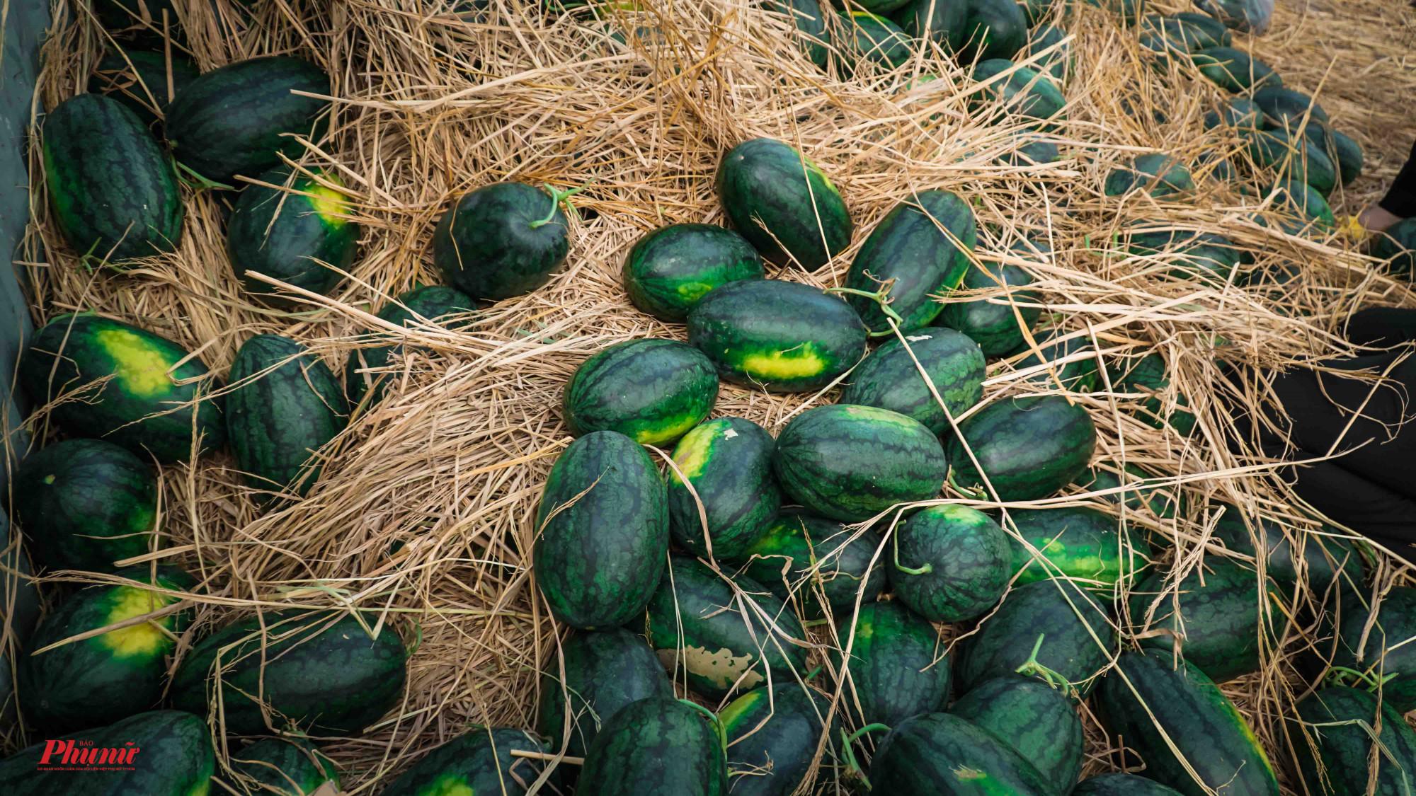 13 Tấn dưa không hạt có giá 4 triệu/tấn