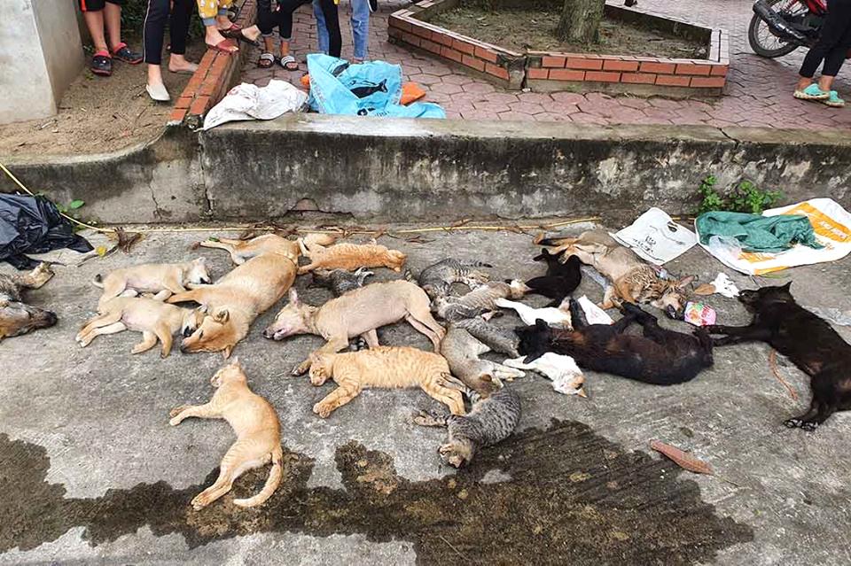 Hàng chục con chó, mèo chết do ăn phải bả