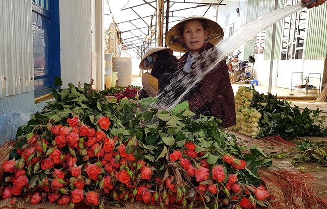 Chưa mua Valentine nào hoa hồng Đà Lạt ế ẩm như năm nay - ảnh Gia Bình