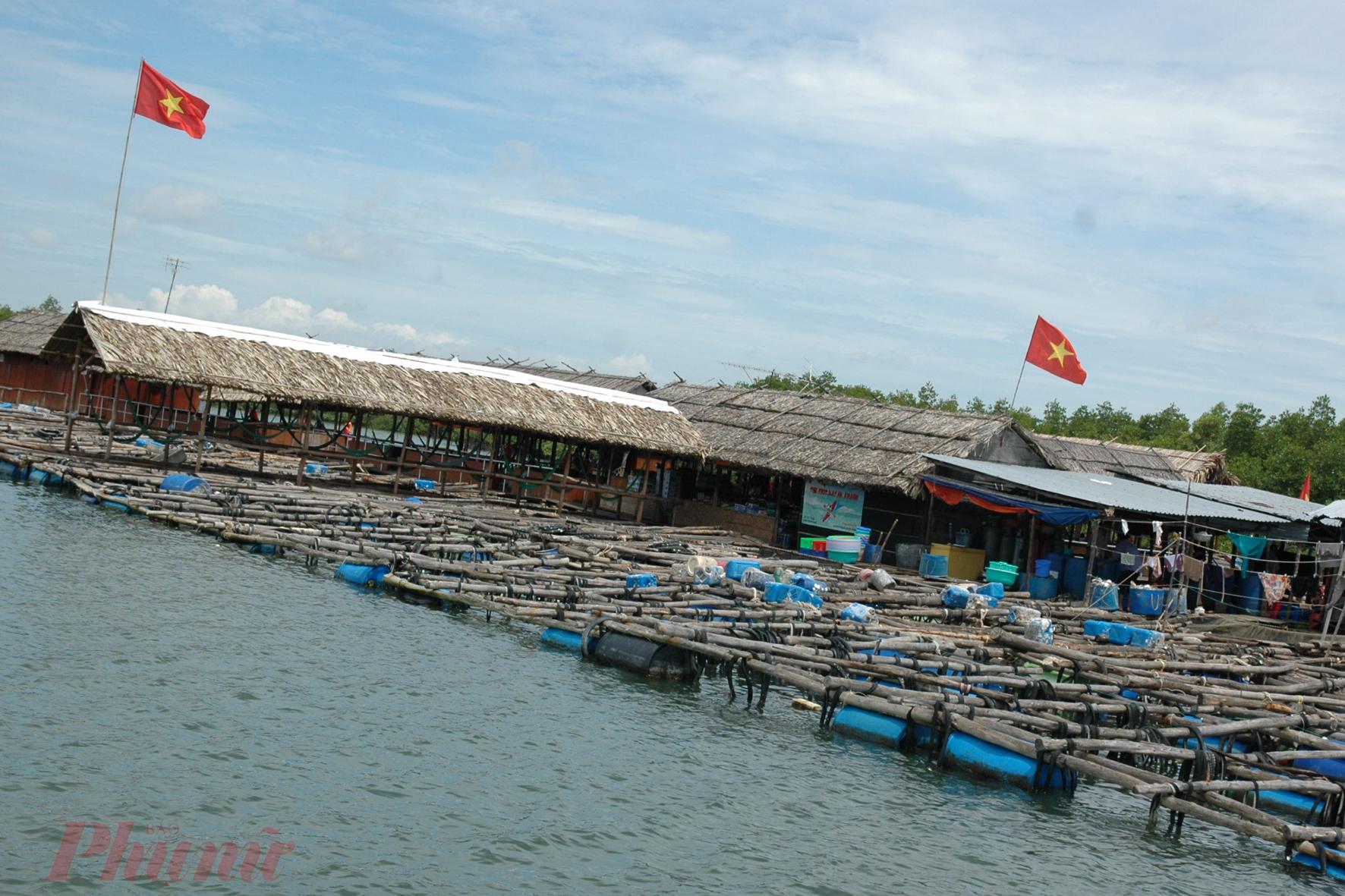 Những bè hàu ở Long Sơn