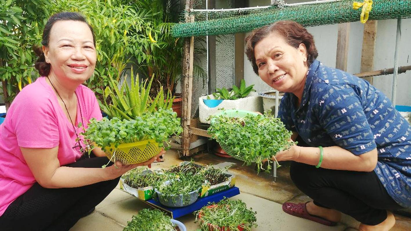 Cô Hòa và cô Kim thu hoạch rau xanh
