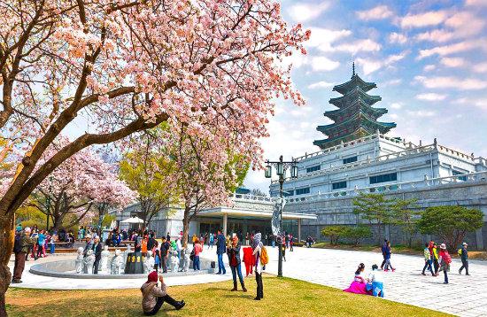Hàn Quốc, Nhật Bản được xem là các điểm đến hấp dẫn, được nhiều công ty tour khai thác mạnh vào thời điểm tháng 3,4 hàng năm. Ảnh: minh hoạ