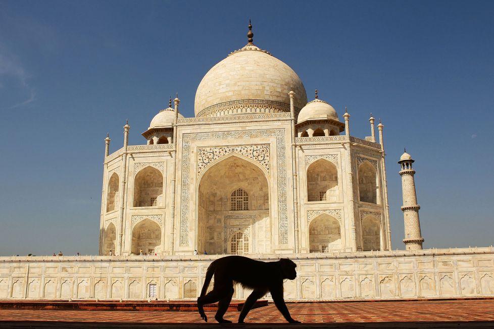 Ấn Độ sợ ông Trump bị khỉ tấn công khi đến thăm đền Taj Mahal